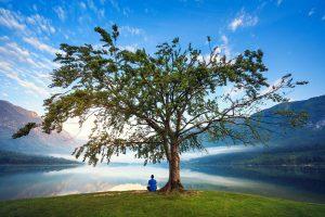Bilde av et stort tre med en person under